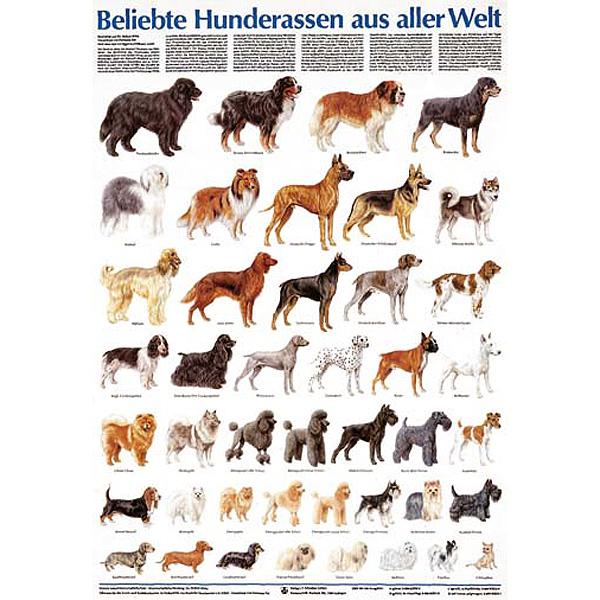 Kleine Hunderassen Mit Bildern Und Namen Pictures to pin on Pinterest