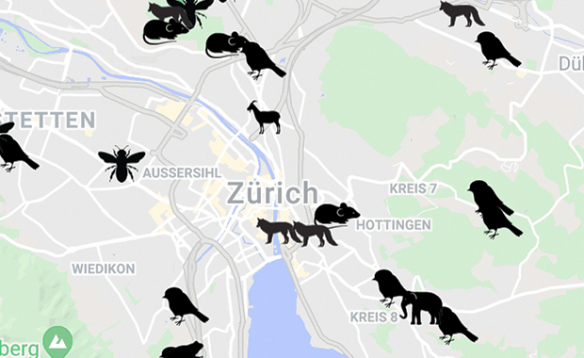 Good to know: A Bunch Of Animals On The Streets